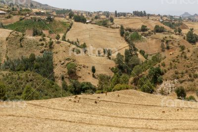 Hilly landscapes of Ethiopia