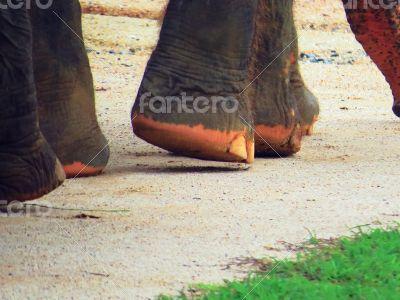 Elephant`s feet 2