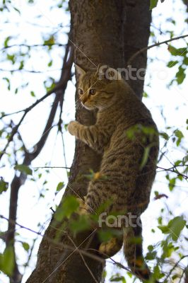 Gray fluffy cat sits on a tree among the branches and leaves