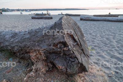 Big Log On A Beach
