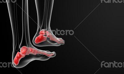 3d rendered illustration of the female foot bone