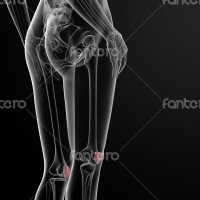 patella bone