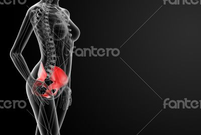 3d render female hip bone