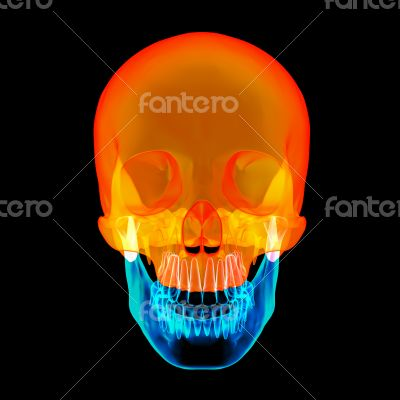 Human Skull. Upper half. with black background