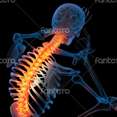 Skeleton of the man with the backbone