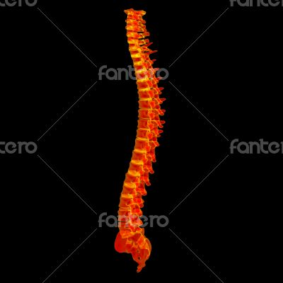 3d render red spine
