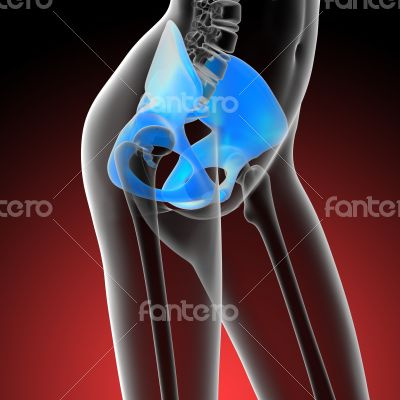 3d render medical illustration of the hip bone