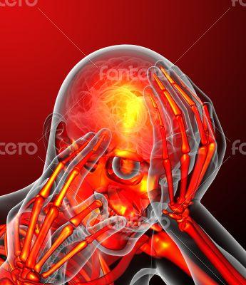 human skeletonl