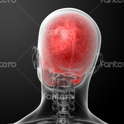 3d render human skull anatomy - top view