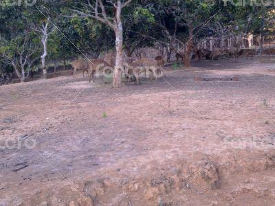 deer bawean number one world
