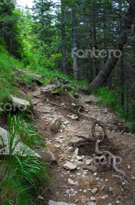 Pathway in summer green mountain forest
