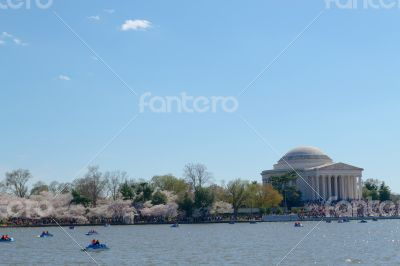 Thomas Jefferson Memorial during the Cherry blossom festival