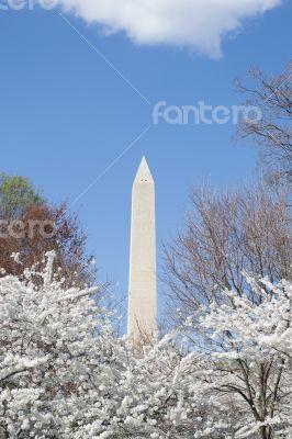 Washington memorial in spring