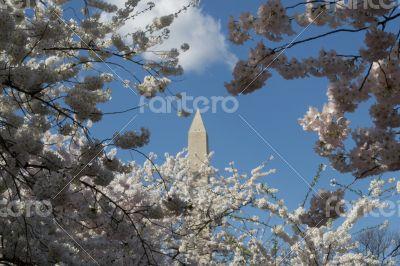 Flowers around the Washington Memorial