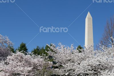 Washington Memorial overseeing the cherry blossom festival
