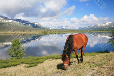 Horse near mountain lake
