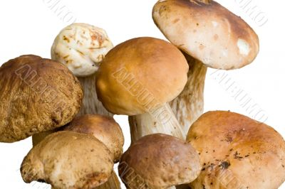 Bunch of edible mushrooms isolated