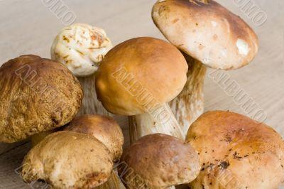 Bunch of edible mushrooms