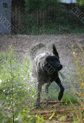 Dog in sparks