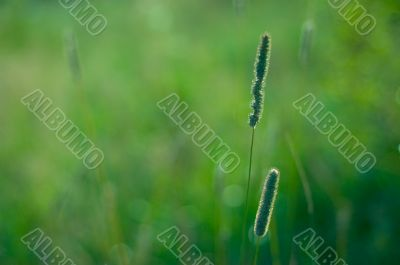 Blurried grass suitable for background