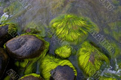 Sea stones with green moss