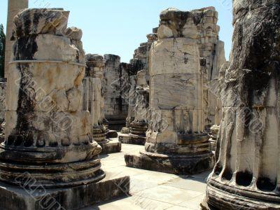 columns of the apollo temple