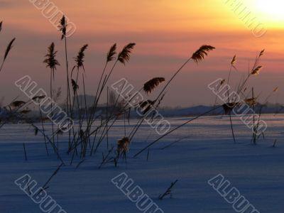 Reed on sundown