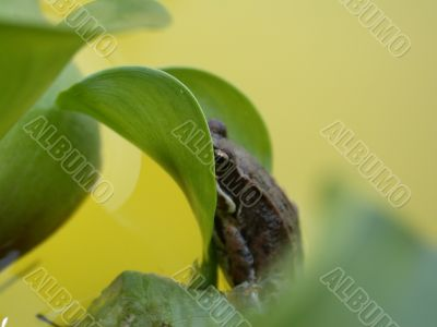Frog on the plant
