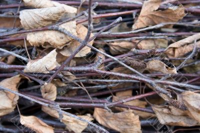 Old twigs