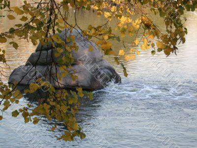 foliage, water, stone