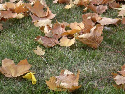 Autumn, leafs
