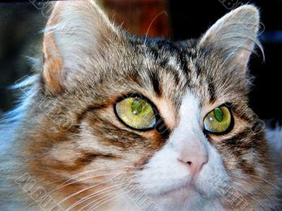 cats, eyes
