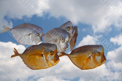 fish - moon
