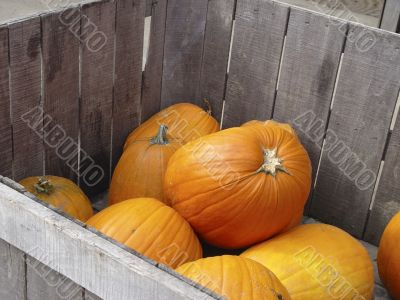 Pumpkins in a crate