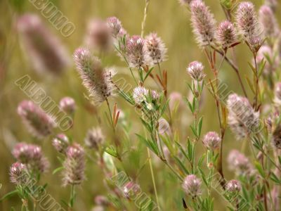 Green grass on meadow with wild flowers