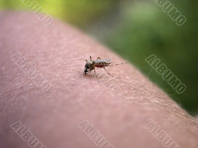 Mosquito on my hand. Part 3.