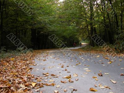 The twisting road doted with leaves