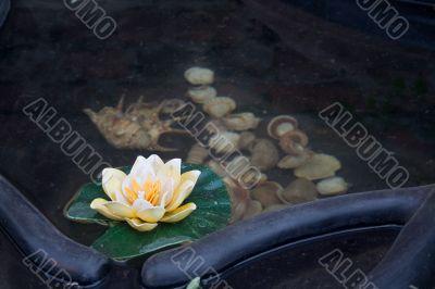 Small decorative pond