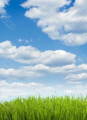 green conservation grass herb