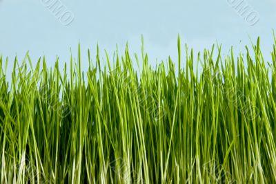 green conservation grass