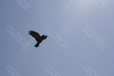 Bird flying up to the sun
