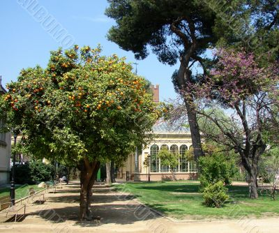 Botanical garden. Barcelona