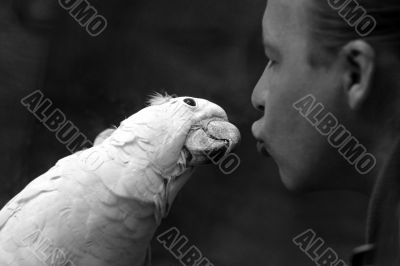 Parrot and the man