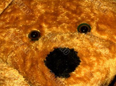 teddy gaze
