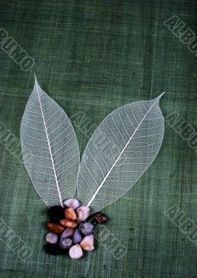 Transparent leaf and small stones