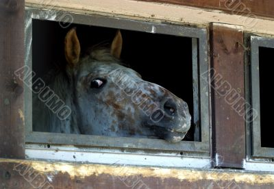 The horse in a shelter