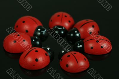 Ladybirds in Circle