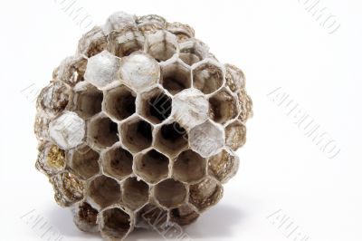 Wasp`s Nest