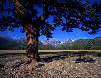 Tree Mountains & Moon