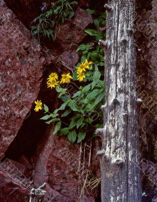Wild Flowers & Red Granite